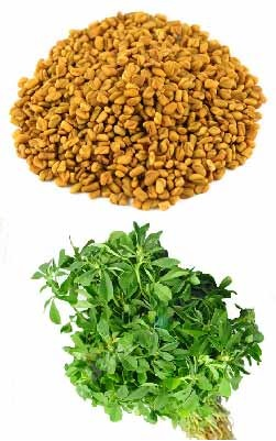 fenugreek-picture